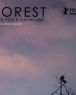 Forest: I See You Everywhere TIFF.20