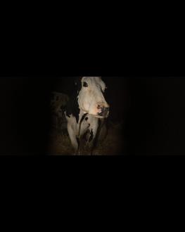 COW LES FILMS DE CANNES À BUCAREST 12