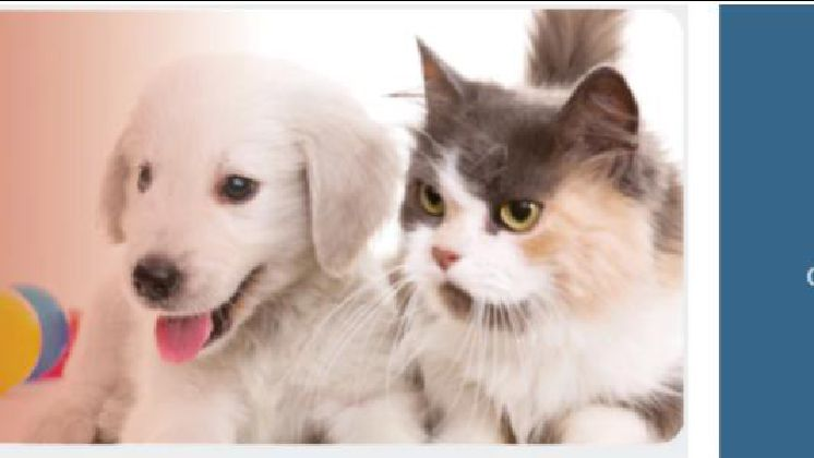 How to Start a Home-Based Dog Grooming Business