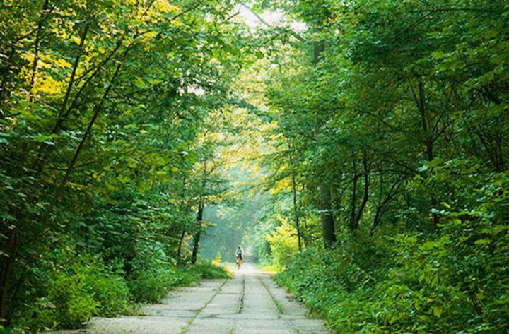 Parc forestier de la Poudrerie