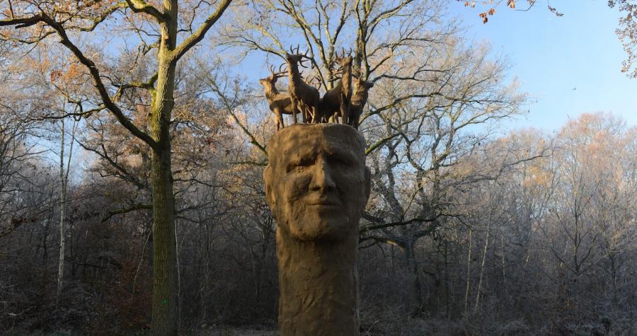 Forêt Rougeot et Bréviandes (77) / © AEV