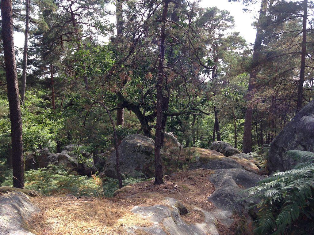 Forêt de Fontainebleau / © Steve Stillman