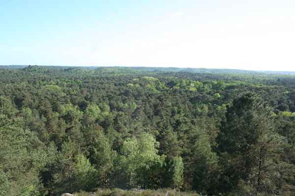 Les 25 bosses dans la forêt de Fontainebleau / © Lucinda Terreyre