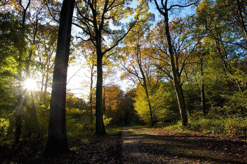 Forêt de Rosny-sur-Seine / © AEV