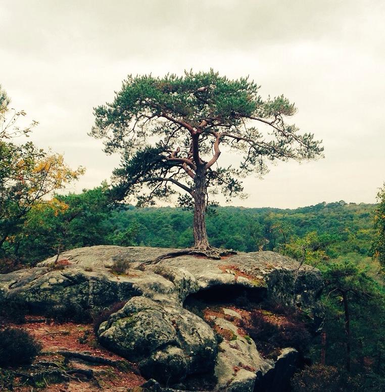 Forêt de Fontainebleau / © Steeve Stillman