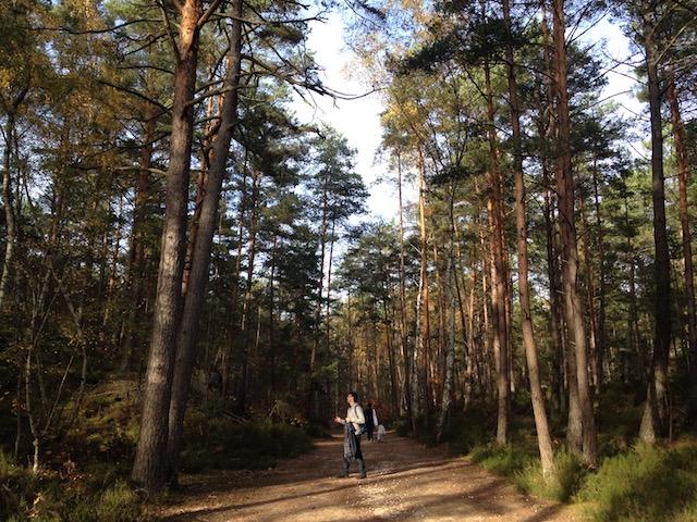 Sentier des 25 bosses en forêt de Fontainebleau