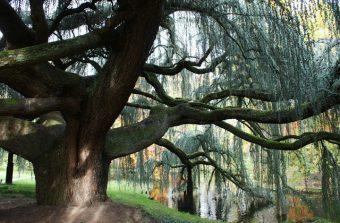 Elu arbre de l'année