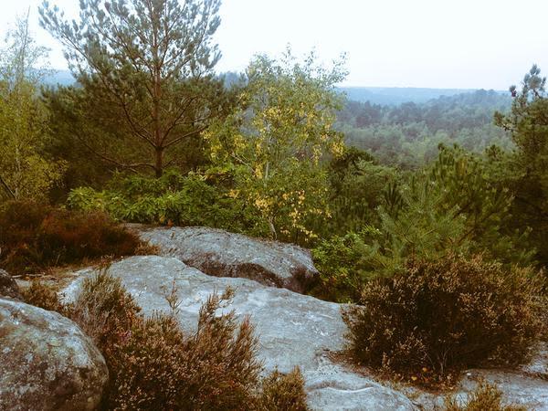 Sentier des 25 bosses dans la forêt de Fontainebleau / DR