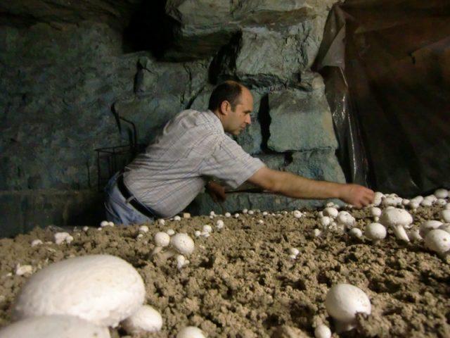 Angel Moïoli, champignonniste à Evecquemont dans les Yvelines / DR