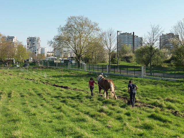 L'association Clinamen qui élève un troupeau de mouton sur les terres de l'université de Paris 13 laboure à cheval en vue de planter de la vigne en 2016, Villetaneuse, Avril 2015 / © Geoffroy Mathieu