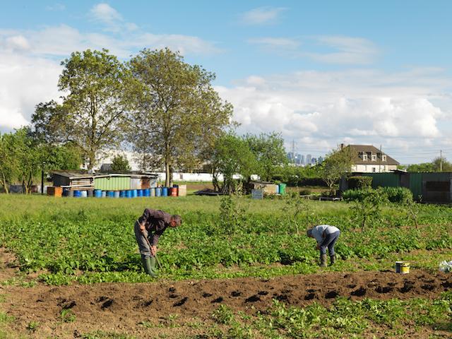 Habitants de Sartrouville cultivant une parcelle en location et bientôt expropriés, Sartrouville, mai 2015 / © Geoffroy Mathieu