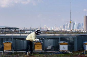 Les abeilles font leur miel des villes