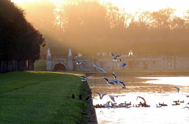 Grand canal à Fontainebleau / Crédit : David fleg