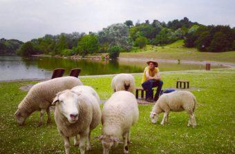 Participez à la tonte des moutons des bergers urbains du 93 ce week-end