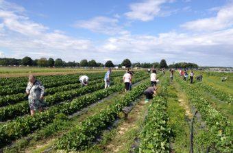 Des fermes-cueillettes pour faire ses courses en plein champs en Île-de-France