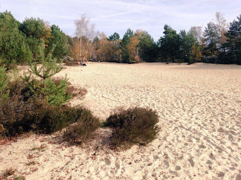 Les sables du cul du chien en forêt de Fontainebleau / © Steve Stillman
