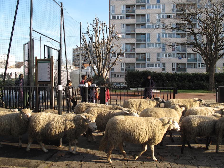 Le troupeau de Clinamen à Saint-Denis / © Mona Prudhomme