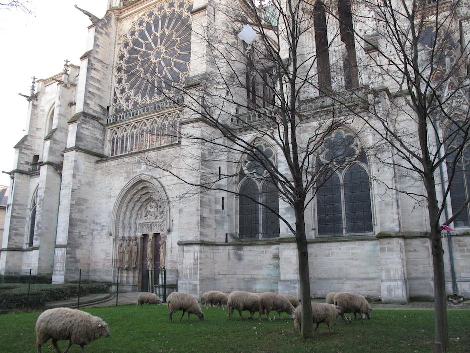 Le troupeau de Clinamen au pied de la basilique Saint-Denis / © Mona Prudhomme