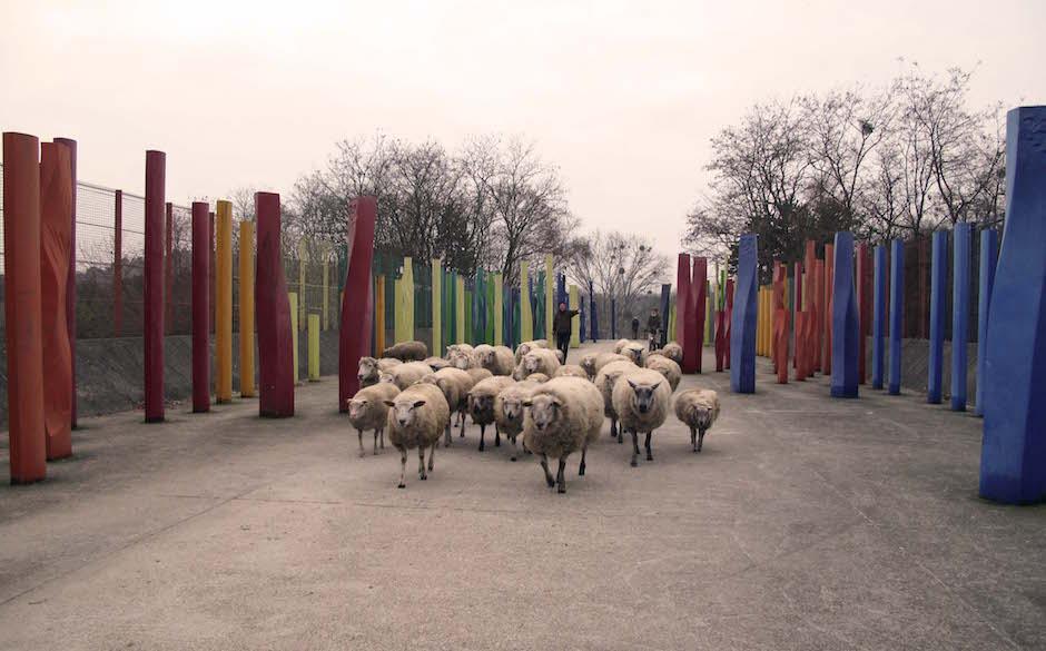 Le troupeau de Clinamen au parc Georges-Valbon / © Mona Prudhomme