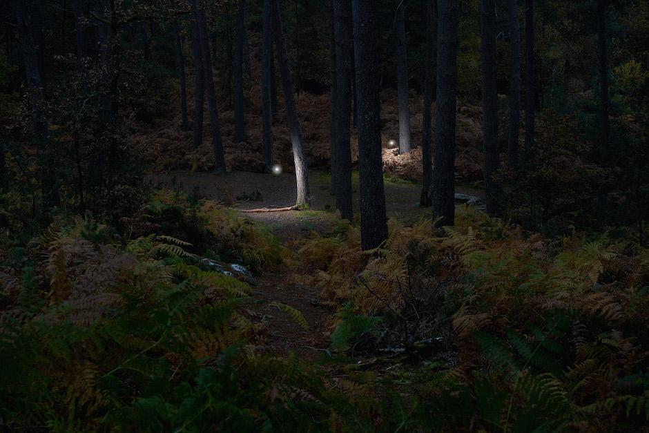 Wandering Spirits, forêt de Fontainebleau / © Benoît Lapray