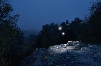 Passez la nuit dans les forêts du Grand Paris ce week-end