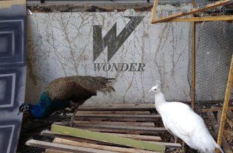 Le Wonder, le kibboutz artistique du 9-3