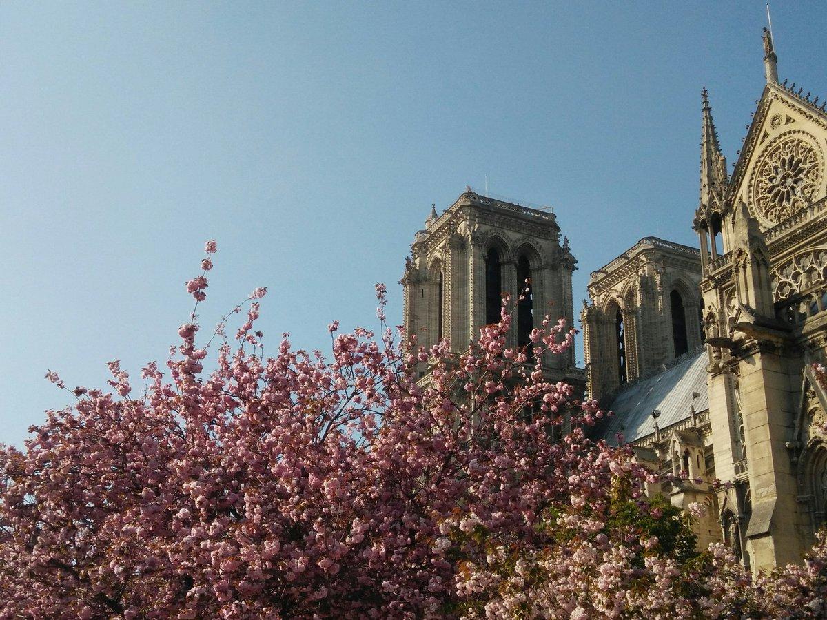 #cerisiersgo à Notre-Dame / © @BenjaminGranjon