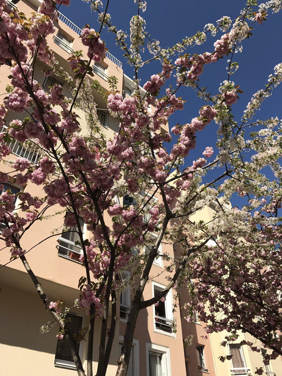 #cerisiersgo / © @nvissotsky