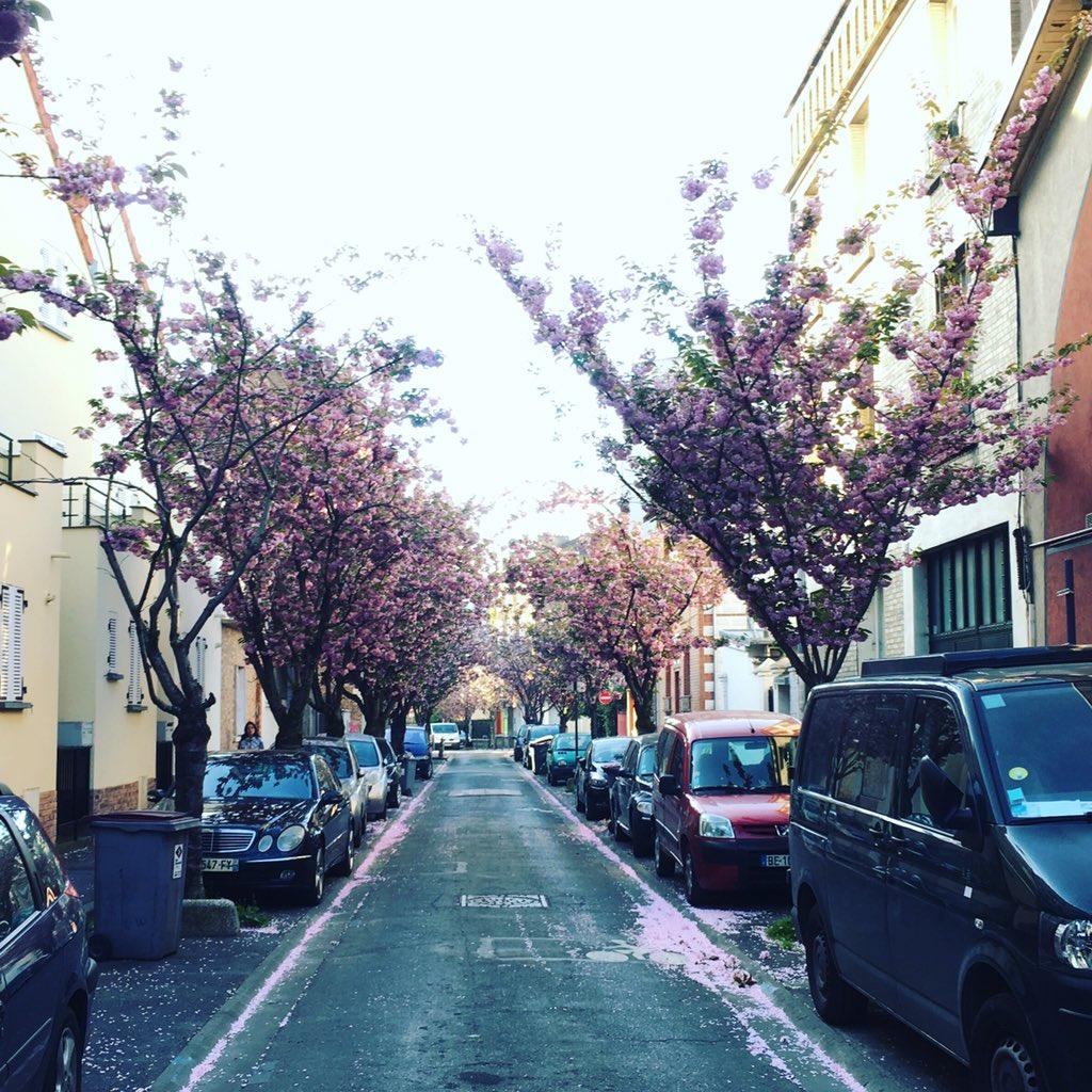 © #cerisiersgo aux Lilas / © @supergreg3