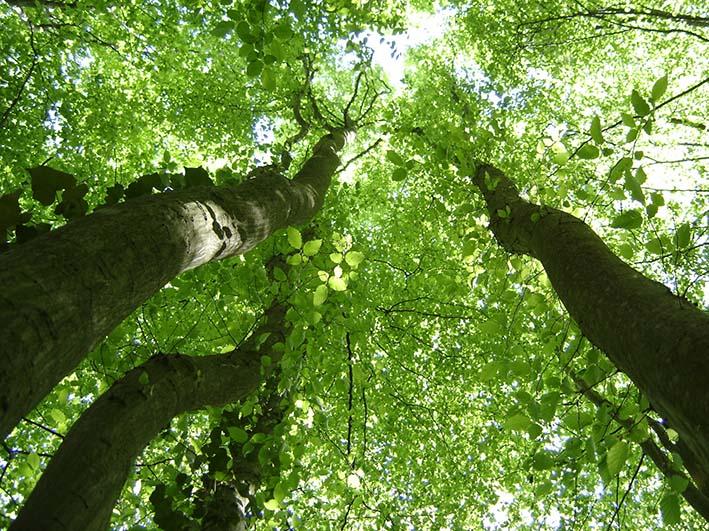 Bois de Verneuil géré par l'Agence des espaces verts / DR