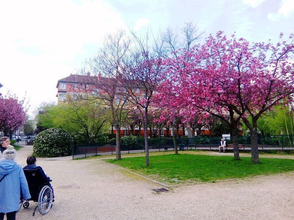 #cerisiersgo à Suresnes / © Musée d'histoire urbain et sociale