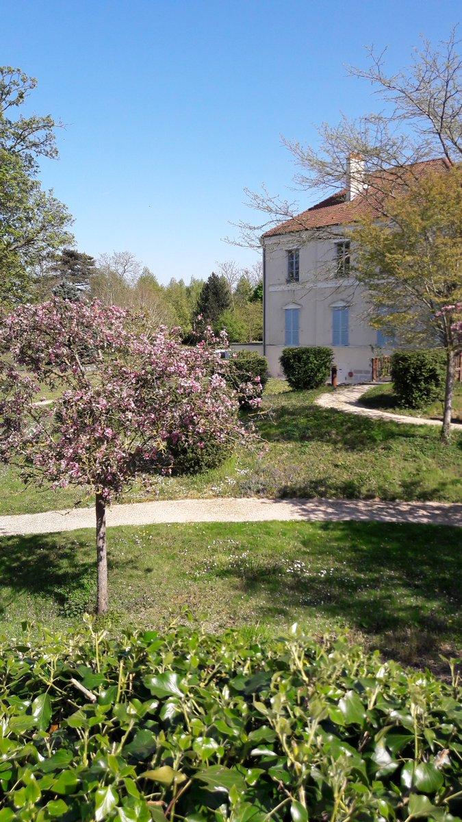 #cerisiersgo au Parc départemental des boucles de Seine à Montesson / © @NoamBouden