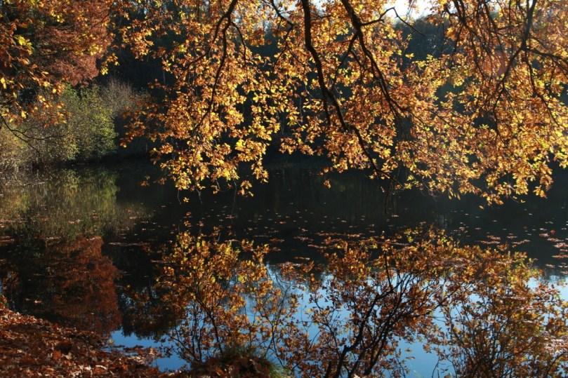 Bois Domanial des Cinq-Cents Arpents © www.randonavigo.fr