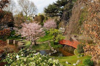 6 parcs où voir fleurir le printemps dans le Grand Paris
