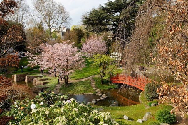 Les cerisiers du Jardin Albert Kahn à Boulogne / © Apostoly (Wikimedia commons)