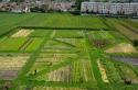 L'ancien champ de salades devenu ferme agriculturelle à Saint-Denis