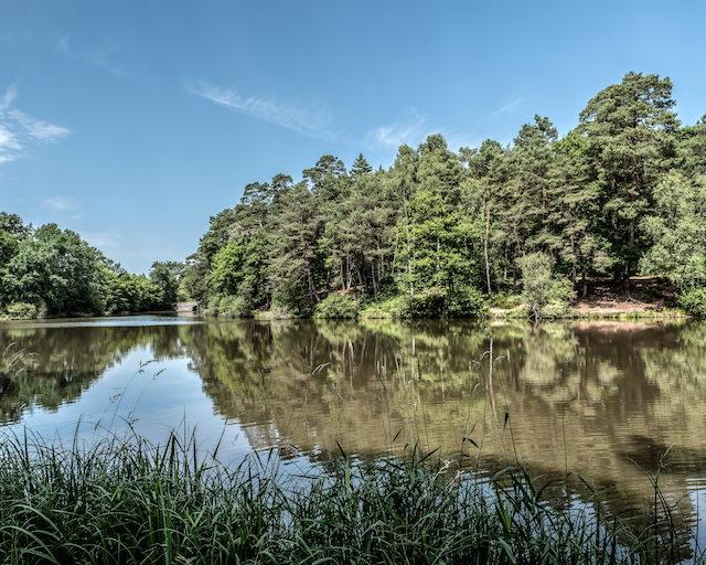 Les étangs de Hollande en forêt de Rambouillet /  © Jean-Fabien Leclanche pour Enlarge Your Paris