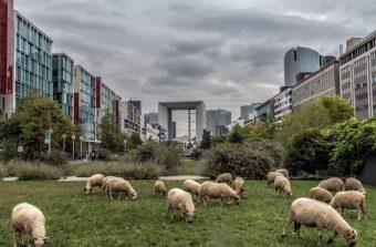 «Le Grand Paris est un parfait laboratoire agricole»