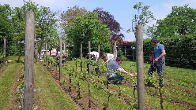 Atelier de l'association Vigne en vie à Guérard (77) / © Vigne En Vie