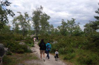 Des événements gratuits pour partir à la découverte des forêts d'Île-de-France