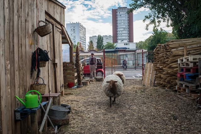 Bergerie de l'association Sors de terre / © Jérômine Derigny