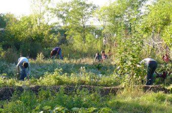 Prenez la clé des champs avec les 48 heures de l'agriculture urbaine