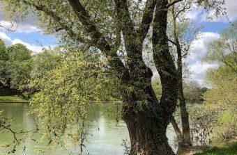 Entre les boucles de la Marne, de Noisy-Champs à Saint-Maur
