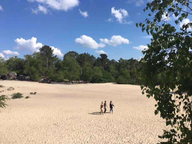 Les sables du Cul du chien dans la forêt de Fontainebleau / © Steve Stillman pour Enlarge your Paris