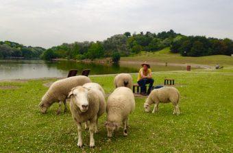 15 idées sorties à la ferme en Île-de-France