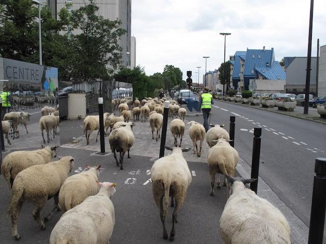 Le troupeau de Clinamen dans les rues d'Aubervilliers / © Mona Prudhomme pour Enlarge your Paris