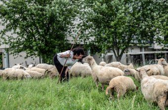 Pour un Grand Paris agricole