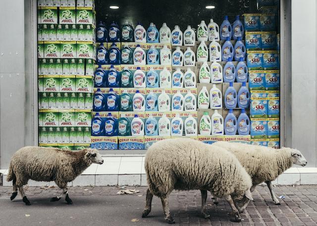 Le troupeau des bergers urbains de Clinamen dans le 93 / © Denis Meyer