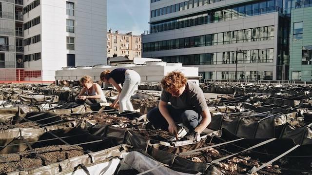 Plantation de safran sur les toits de Paris par les Biens Elevées / © Bien Elevées