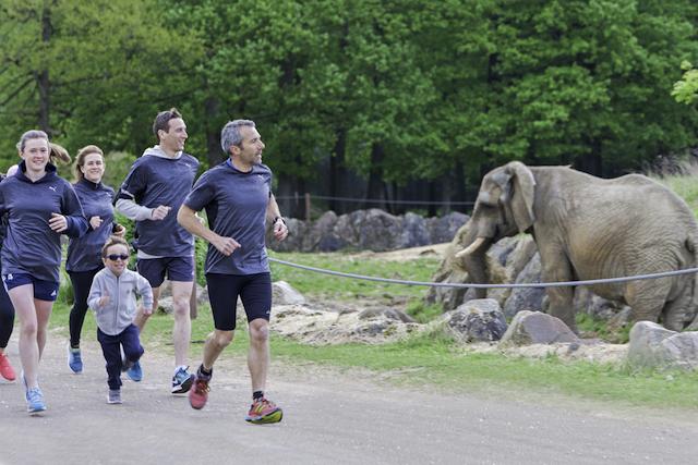 La Thoiry Wild Race au zoo de Thoiry / © Zoo de Thoiry